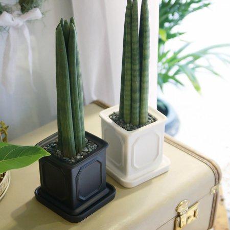 몰딩 화분 스투키 공기정화식물 화이트